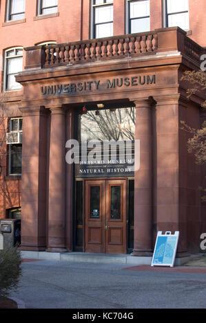 Harvard Museum of Natural History - Stock Photo