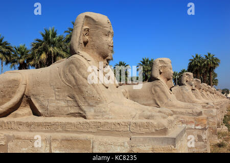 Temple of Luxor, avenue of sphinxes in front of the temple, Africa, Upper Egypt, UNESCO World-heritage - Stock Photo