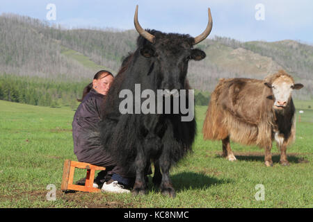 BAT-ULZII, MONGOLIA, July 15, 2013 : women organize the milking of the yaks and the goats in the steppe. Half of - Stock Photo