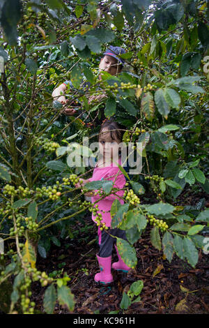 Woman picker and her daughter, Hacienda Venecia Coffee Farm, Manizales, Colombia - Stock Photo
