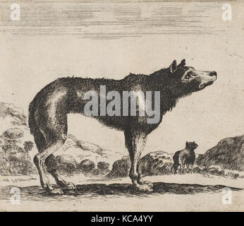 Plate 20: wolf, from 'Various animals' (Diversi animali), After Stefano della Bella, after 1641 - Stock Photo