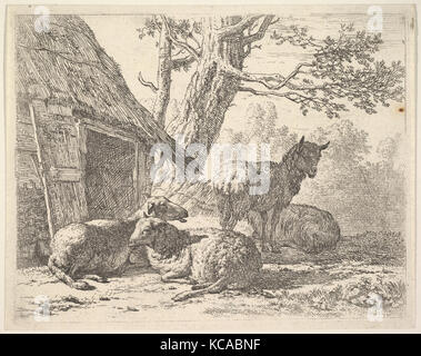 Four sheep, one sheep stands among three others lying on the ground next to a shed with thatched roof and open door - Stock Photo