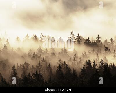 Beautiful autumnal landscape with mountain view, morning foggy valley within sunrise. Foggy strips between treetops - Stock Photo