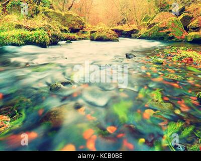 Stony bank of autumn mountain river covered by orange beech leaves. Fresh colorful leaves on branches above water make reflection