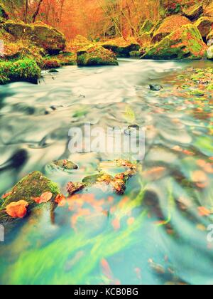 Fall in nature. Colors of autumn mountain river. Colorful gravel with leaves, leaves trees bended above river. - Stock Photo