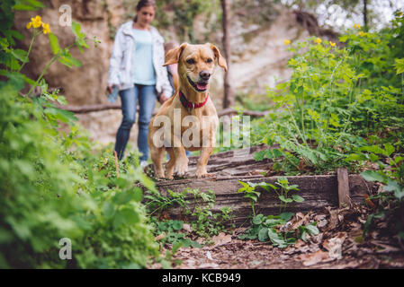 Small yellow Dog on a forest trail with a people walking in the background - Stock Photo