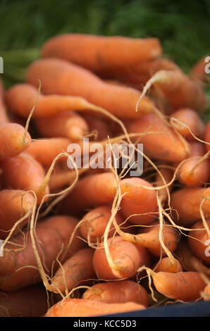 Carrots Roots Close-Up Green Leaves Farmers Market Organic Fresh Vegetables - Stock Photo