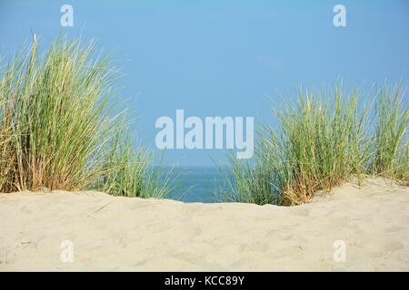 Look by the beach oat in the dunes to the North Sea - Stock Photo