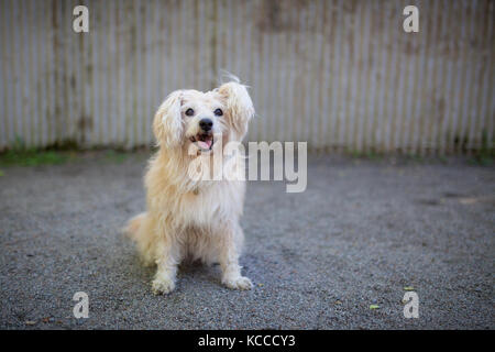 White mixed breed dog in park - Stock Photo