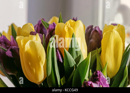 Bouquet of yellow tulips with purple in sunny rays - Stock Photo