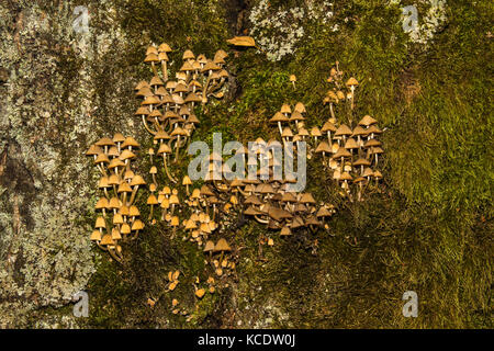 Mushrooms and moss growing on a tree in a middle of the autumn - Stock Photo