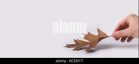 Isolated autumn maple leaves foliage over a white background.  Isolated wild oak forest leaves with white empty - Stock Photo