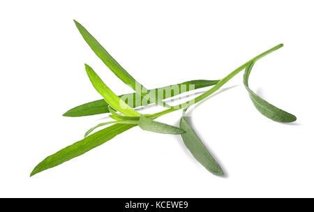 Tarragon (Artemisia dracunculus)  isolated on white background - Stock Photo