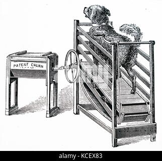 Engraving depicting a butter churn powered by a dog running on a treadmill. Dated 19th Century - Stock Photo