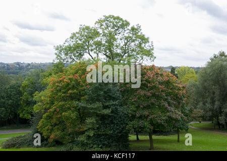 Alexandra Palace. North London, UK. 4th Oct, 2017. Autumnal colours in Alexandra Palace, north London. Credit: Dinendra - Stock Photo