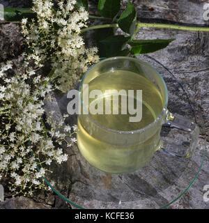 Holunderblüten-Tee, Holunderblütentee, Tee, Kräutertee, Heiltee, Blütentee, Holunderblüten, Holunderblüte, Holunder - Stock Photo