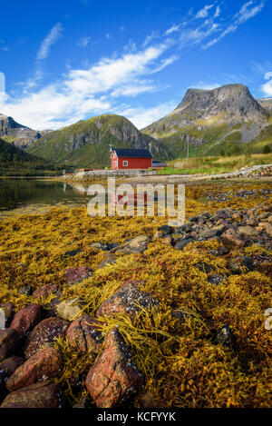Stones and seaweed on a beach on Lofoten islands in Norway - Stock Photo