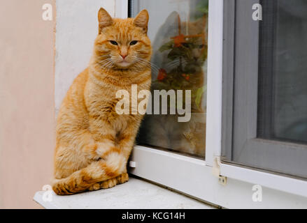 The pretty homeless beautiful ginger red striped cat sits on the windowsill - Stock Photo
