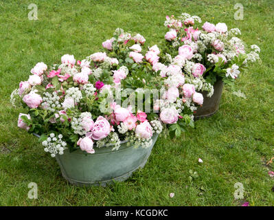 Peony bouquet in a vintage tin bin in the garden - Stock Photo