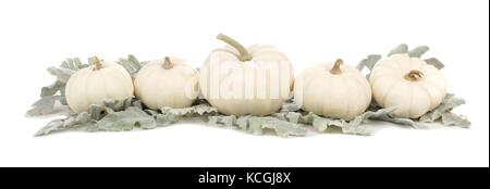 Autumn border arrangement of white pumpkins and silver leaves isolated on a white background - Stock Photo