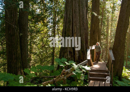Woman walking on trail at The Ancient Forest Trail outside Prince George, BC, Canada. Inland Rain Forest, Western - Stock Photo