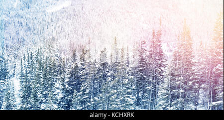 Snowy pine trees on alp mountain slope during winter - Stock Photo
