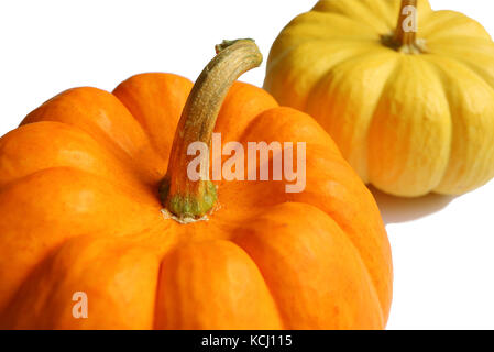 Closed up Vibrant Color Ripe Pumpkins with Stem Isolated on White Background - Stock Photo