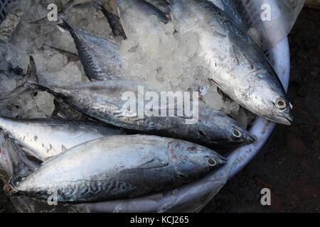 Fisch auf einem Markt mit Eis - Fish on a market with ice - Stock Photo