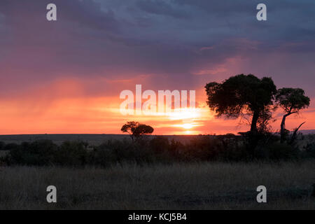 African Sunset with trees and brush silhouettes on safari in Northern Tanzania Serengeti - Stock Photo