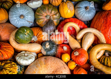 Assorted pumpkins, squashes and gourds - Stock Photo