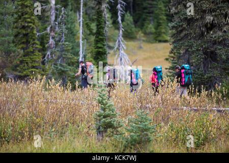 Five hikers make their way along the boardwalks in Paradise Meadows, near Mt. Washington, Strathcona Park, Mt. Washington, - Stock Photo
