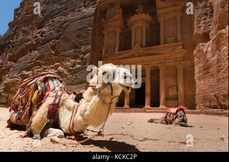 Two camels, used by local guides for tourists entertainment and transport, crouch in sand in front of the Treasury, - Stock Photo