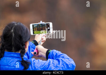 Tourist using cell phone to photograph elk in Jasper National Park, Alberta, Canada - Stock Photo