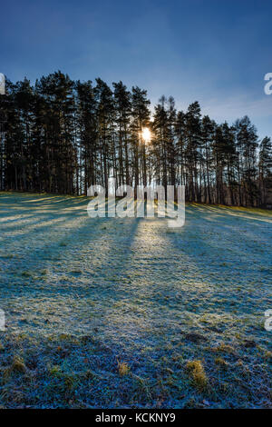Color winter landscape image with the sun shining through trees throwing shadows on a green field with hoar frost - Stock Photo