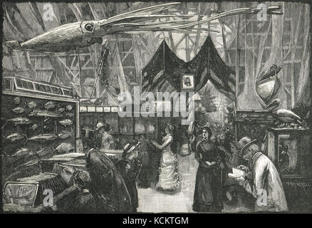 United States Court at The International Fisheries Exhibition of 1883, - Stock Photo