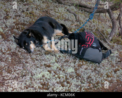 Spectator's dog sleeping while its owner watches the first staging of an Enduro World Series mountain bike racing - Stock Photo