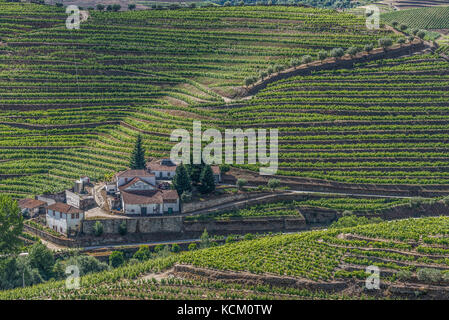 view of vineyards from Quinta Dona Maria, Douro Valley, - Stock Photo