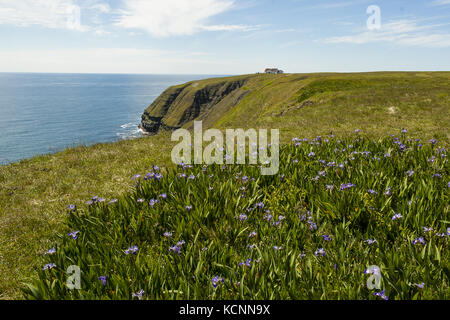 Cape St. Mary's Ecological Reserve,  located near Cape St. Mary's on the Cape Shore, on the southwestern Avalon - Stock Photo