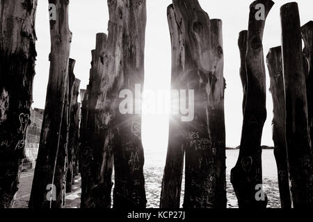 Sunlight through wooden log sea defences in Brittany France. - Stock Photo