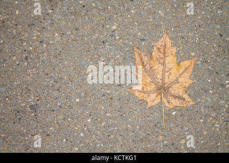 A lonely yellow leaf on a gray asphalt. - Stock Photo