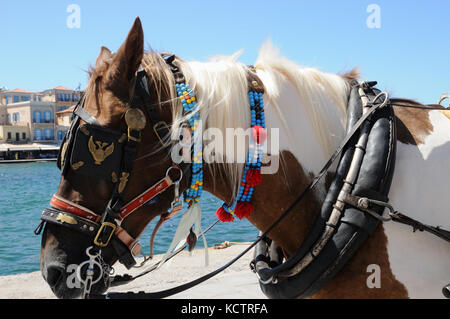 Waterfront ChaniaA horse used to pull traditional carriages to take tourists on a tour of the town of Chania in - Stock Photo