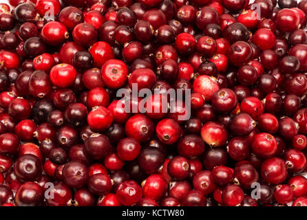 Red ripe cranberry berries in large quantities - Stock Photo