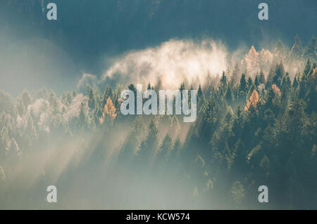 Panoramic view of misty forest at majestic sunrise over trees. Beautiful autumnal landscape of a mountains with - Stock Photo