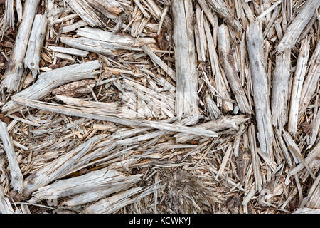 Abstract top view of old branches, sticks and twigs lying on the ground. - Stock Photo