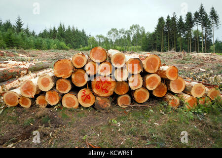 Piled up harvested Pine tree trunks in a deforested landscape. - Stock Photo