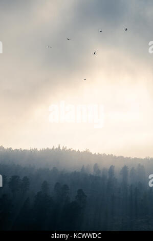 Birds in atmospheric lighting over a forest - Stock Photo