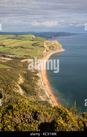 View along Jurassic Coast looking east to Seatown from summit of Golden Cap, Seatown, Dorset, England, United Kingdom, - Stock Photo
