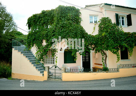 House with a grape vine growing on the walls in the town of Ipsos in Corfu - Stock Photo