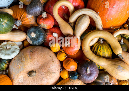 Assortment of colourful pumpkins, squashes and gourds - Stock Photo