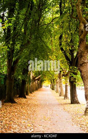 Griffith Avenue, Dublin 9, Ireland, Tree Lined street in